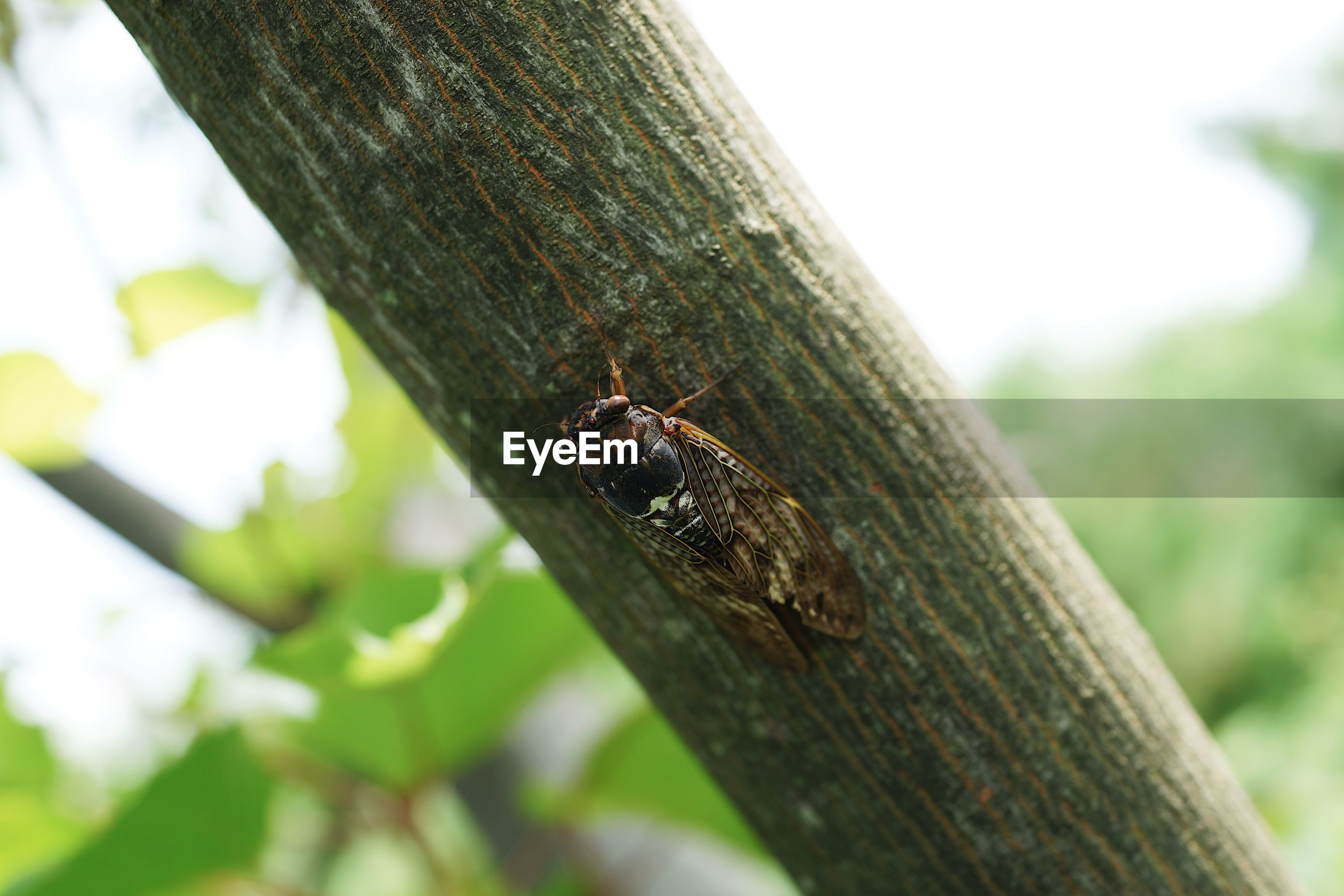 INSECT ON TREE TRUNK