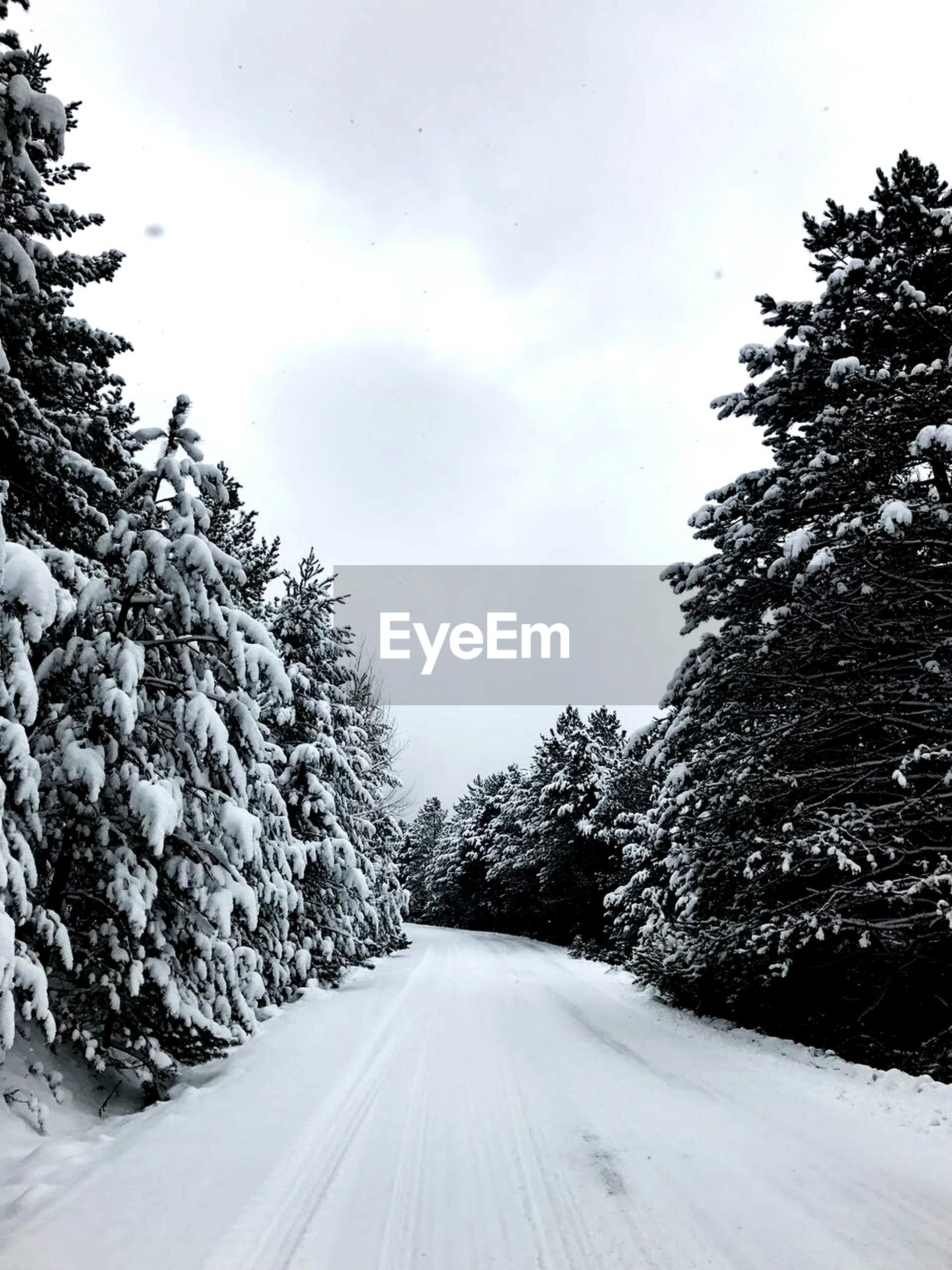tree, snow, road, winter, cold temperature, the way forward, transportation, no people, nature, scenics, sky, beauty in nature, outdoors, snowing, day