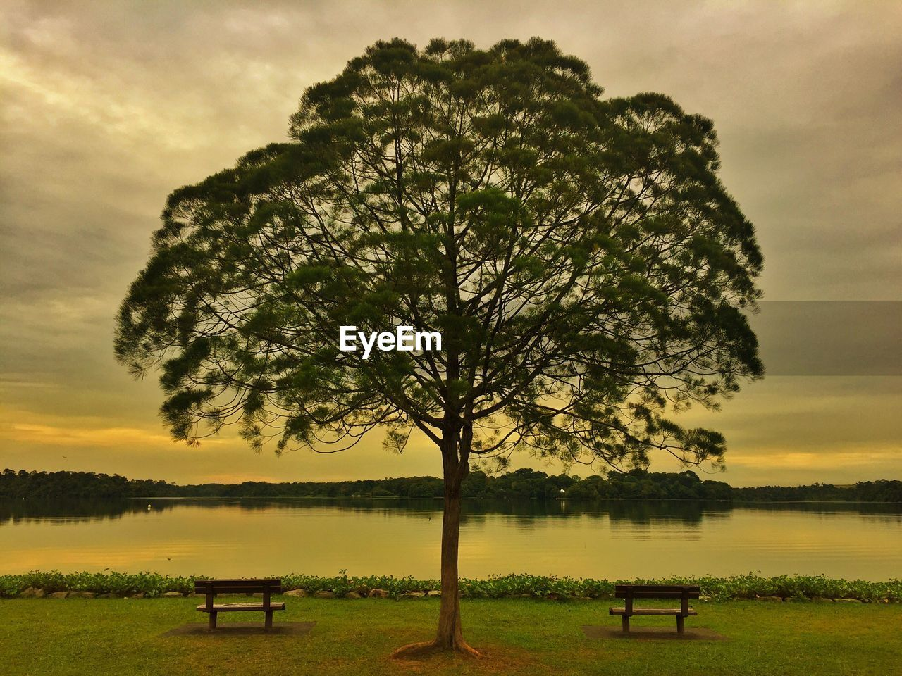 tree, nature, tranquility, beauty in nature, tranquil scene, scenics, lake, sky, idyllic, water, no people, sunset, bird, landscape, outdoors, grass, animal themes, scenery, day