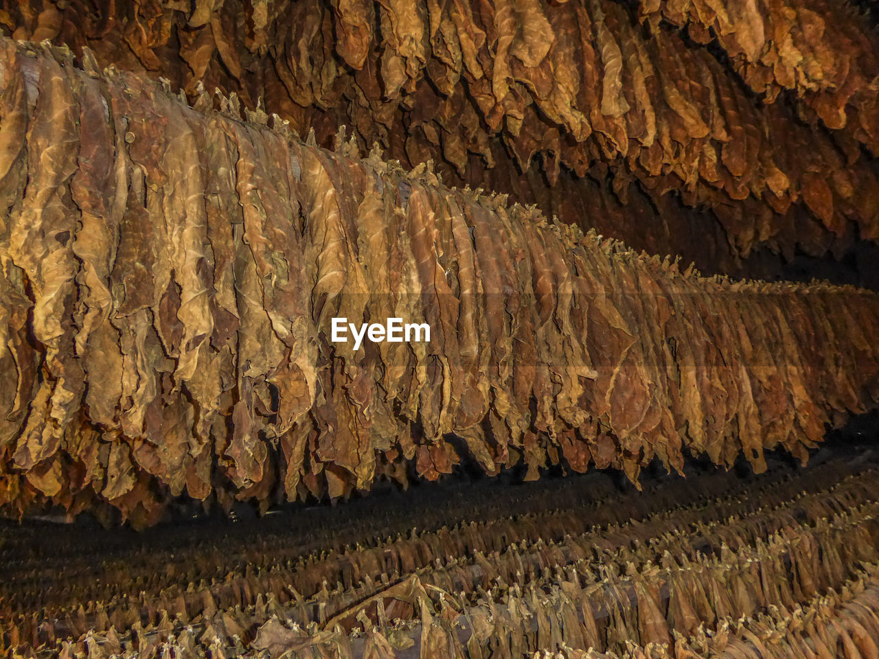Full Frame Shot Of Tobacco Leaves Drying In Barn
