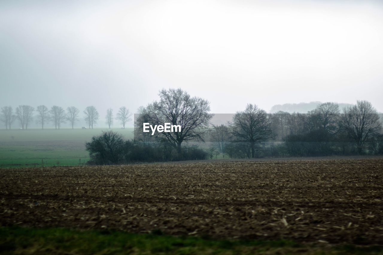 Bare Trees On Landscape In Foggy Weather
