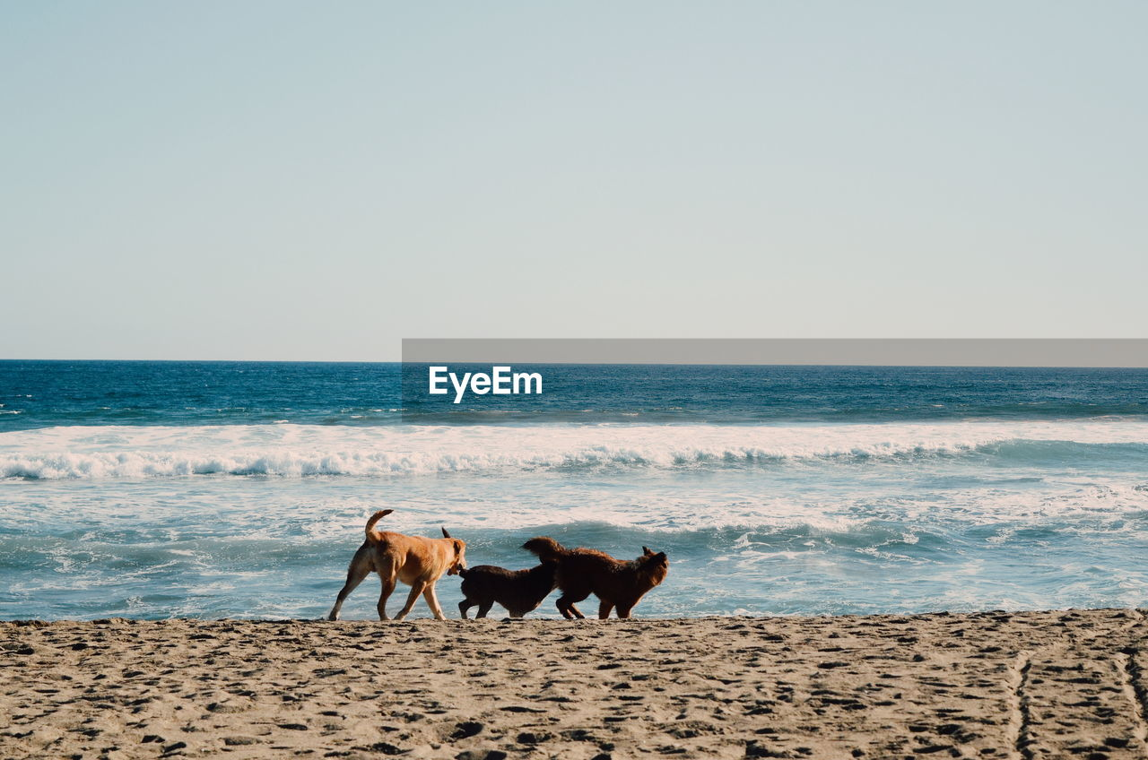DOGS STANDING ON BEACH AGAINST SEA