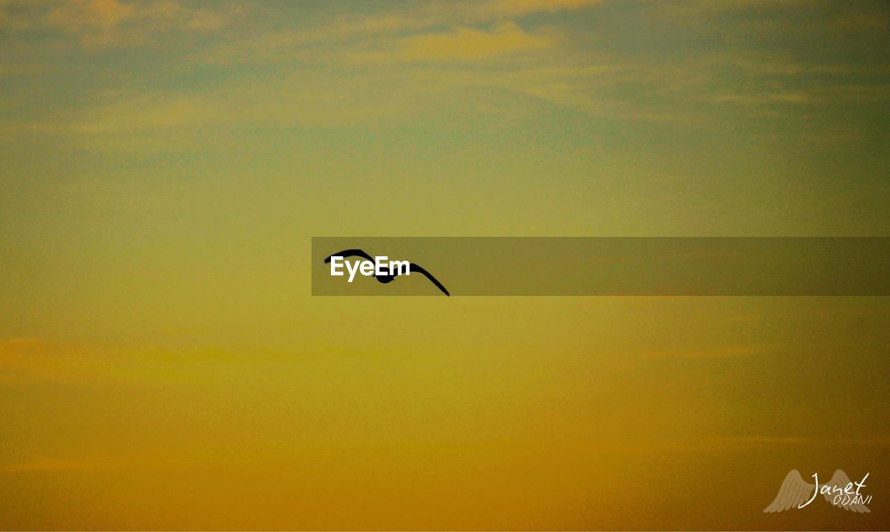 animal themes, animal, animal wildlife, vertebrate, animals in the wild, flying, bird, sky, one animal, silhouette, beauty in nature, mid-air, sunset, no people, low angle view, nature, scenics - nature, spread wings, outdoors, tranquility