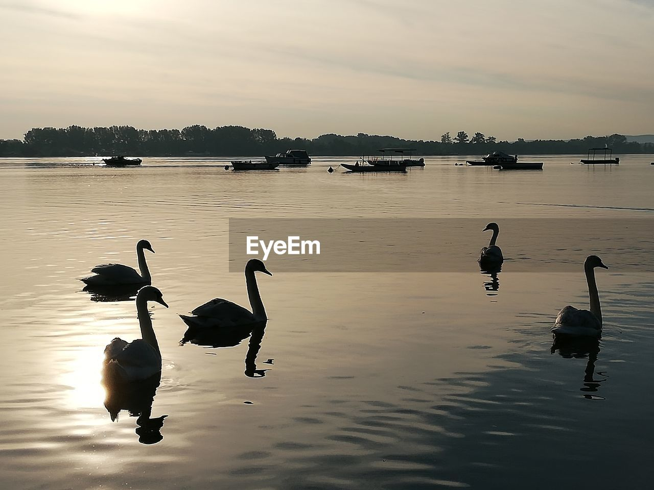 water, bird, animals in the wild, animal themes, animal wildlife, animal, group of animals, vertebrate, sky, lake, beauty in nature, sunset, reflection, nature, waterfront, swimming, no people, water bird, cloud - sky