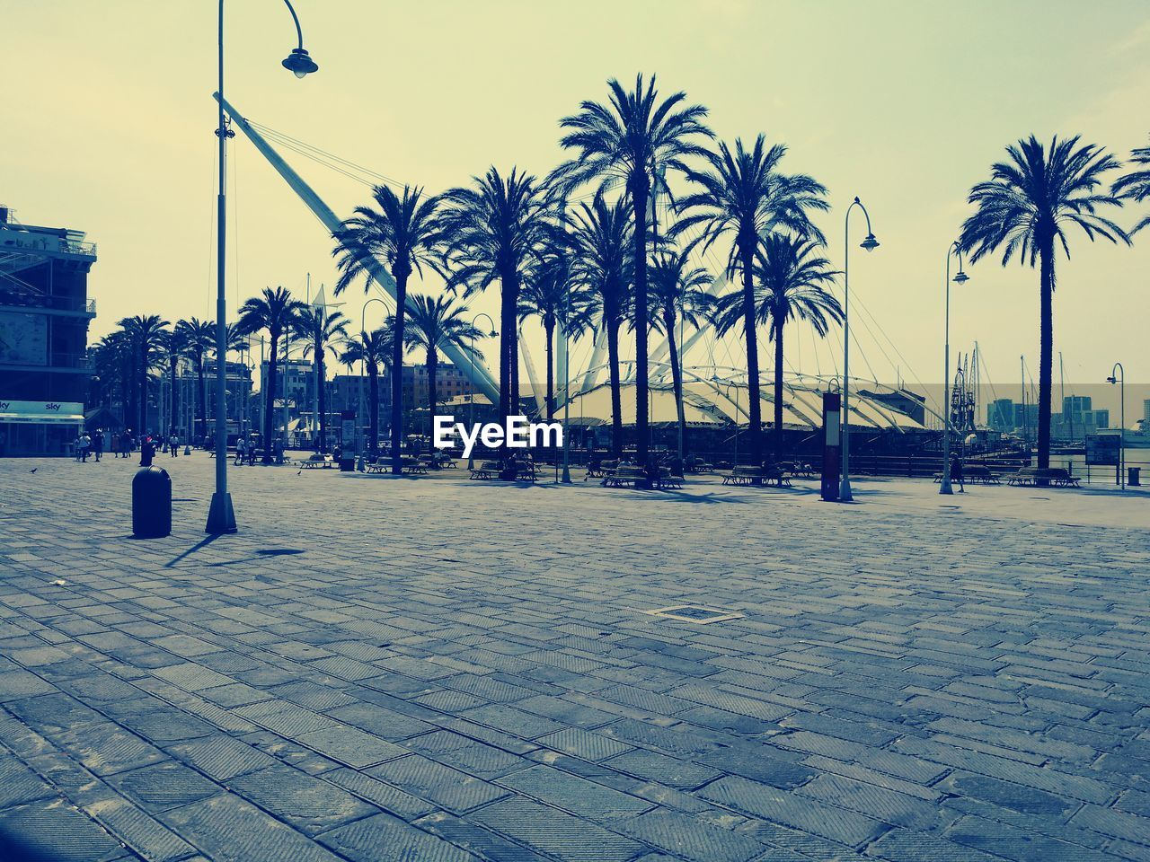 palm tree, tree, outdoors, architecture, one person, city, sky, day, people