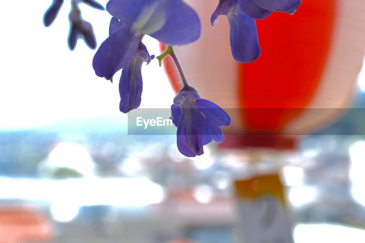 flower, beauty in nature, petal, nature, fragility, focus on foreground, growth, freshness, close-up, outdoors, plant, day, flower head, blooming, scented, no people, water, sky