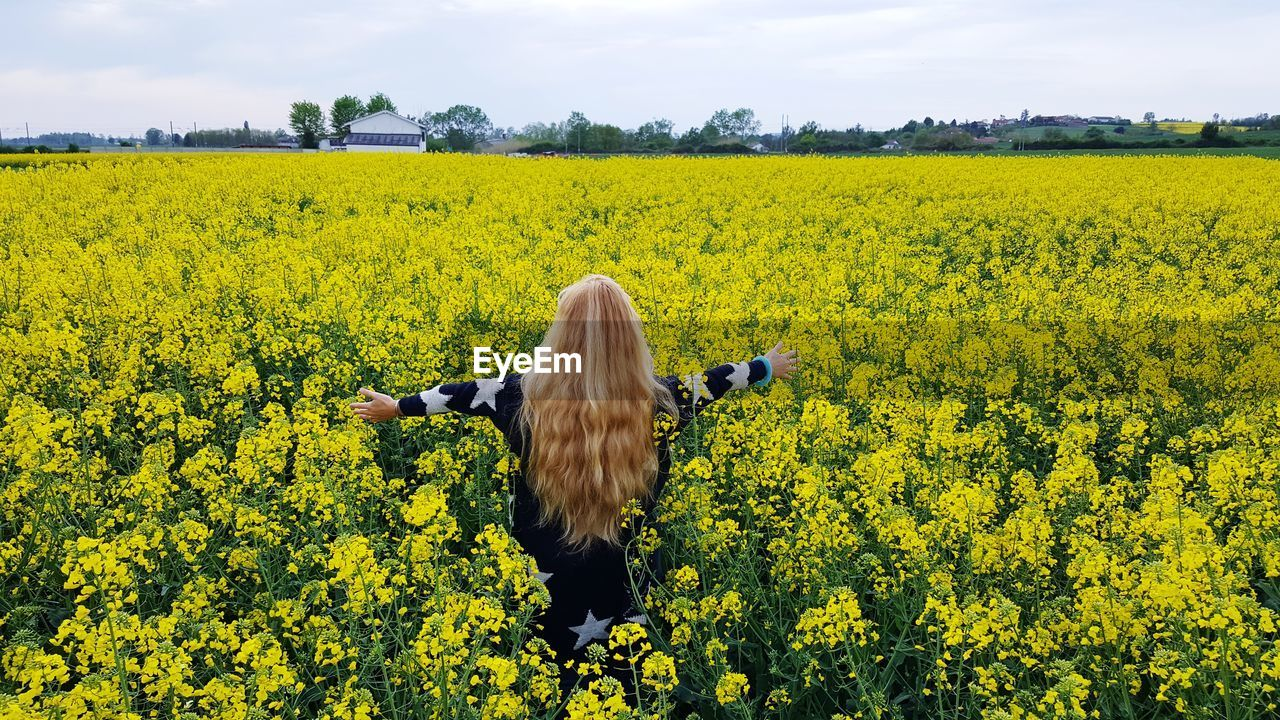 Rear view of woman with arms raised standing amidst yellow flowering plants