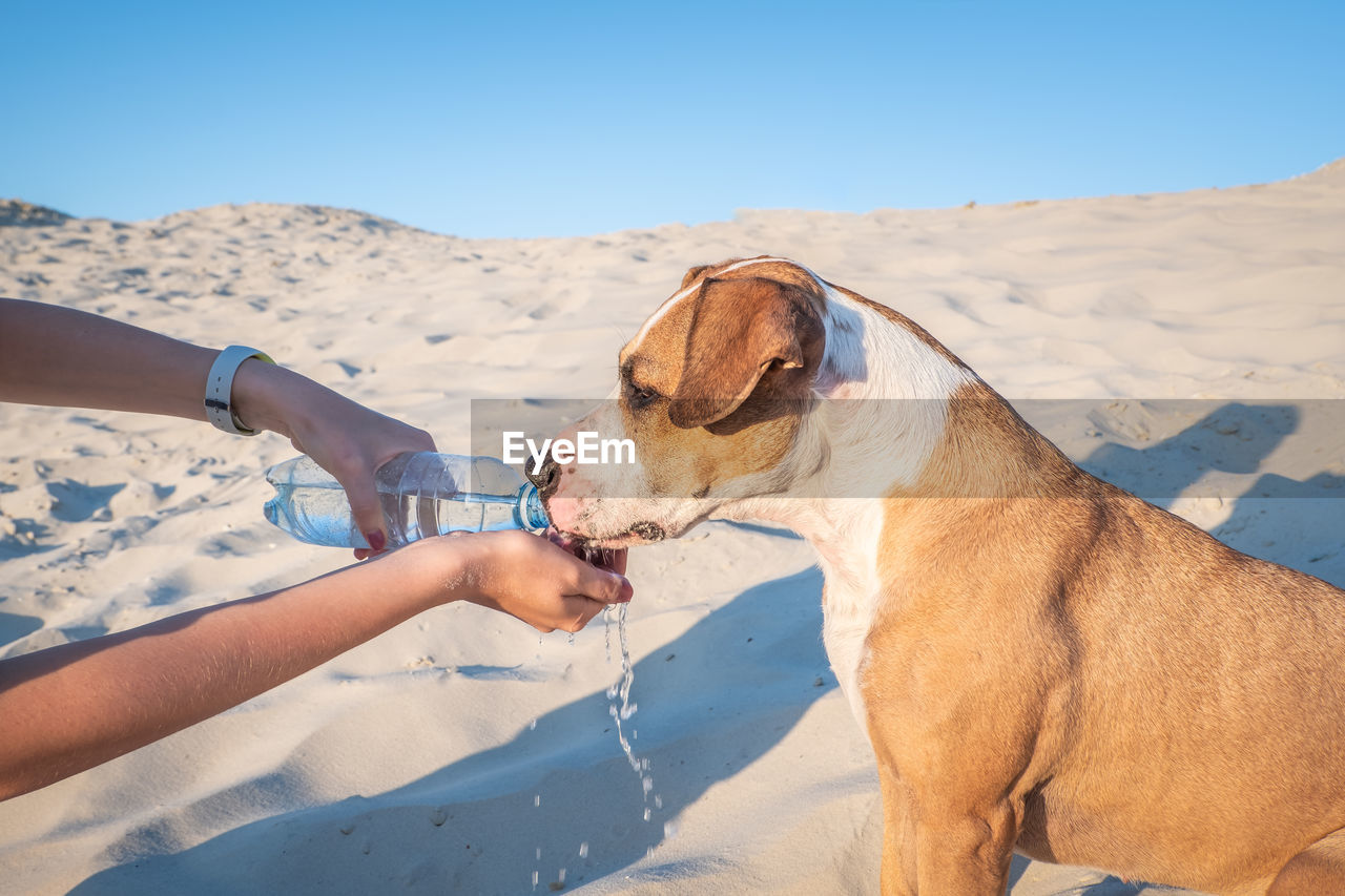 Cropped Hand Feeding Water To Dog On Sand At Beach Against Sky