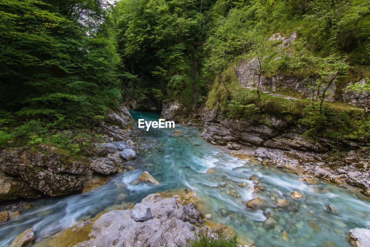 water, tree, forest, rock, scenics - nature, river, motion, flowing water, plant, beauty in nature, blurred motion, rock - object, land, nature, long exposure, solid, no people, day, flowing, outdoors, stream - flowing water, rainforest