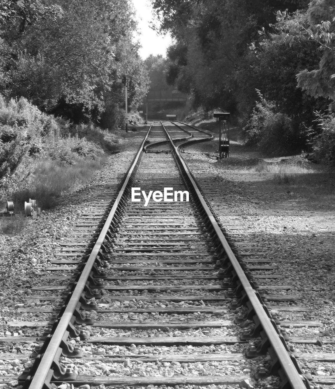 Railroad tracks amidst trees