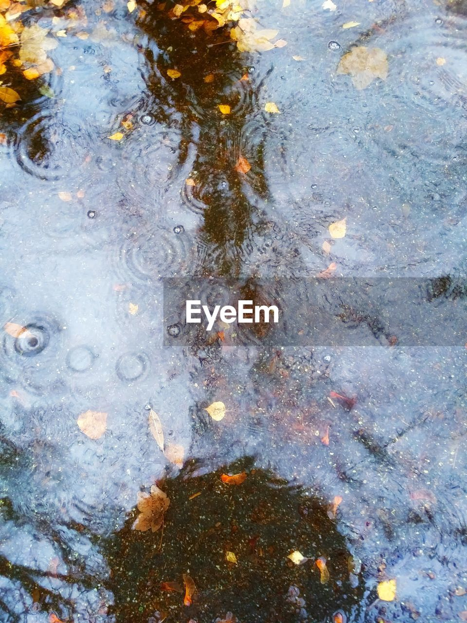 water, high angle view, puddle, oil spill, no people, reflection, day, full frame, outdoors, nature, floating on water, close-up