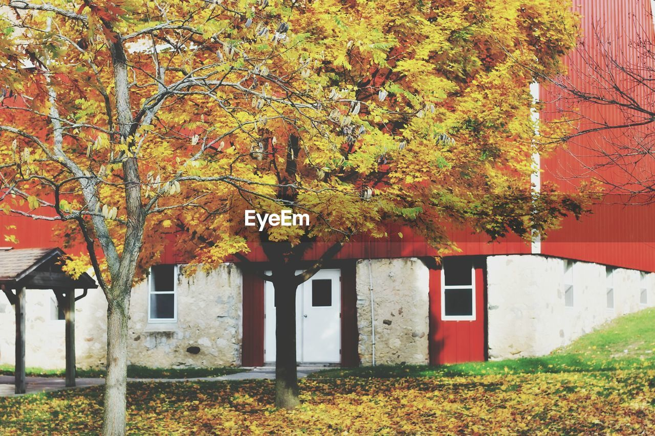 autumn, change, tree, leaf, built structure, architecture, building exterior, orange color, nature, day, no people, house, outdoors, beauty in nature, branch, maple, sky