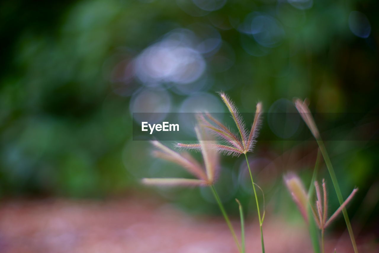 focus on foreground, plant, nature, growth, outdoors, green color, day, close-up, no people, beauty in nature, fragility, freshness
