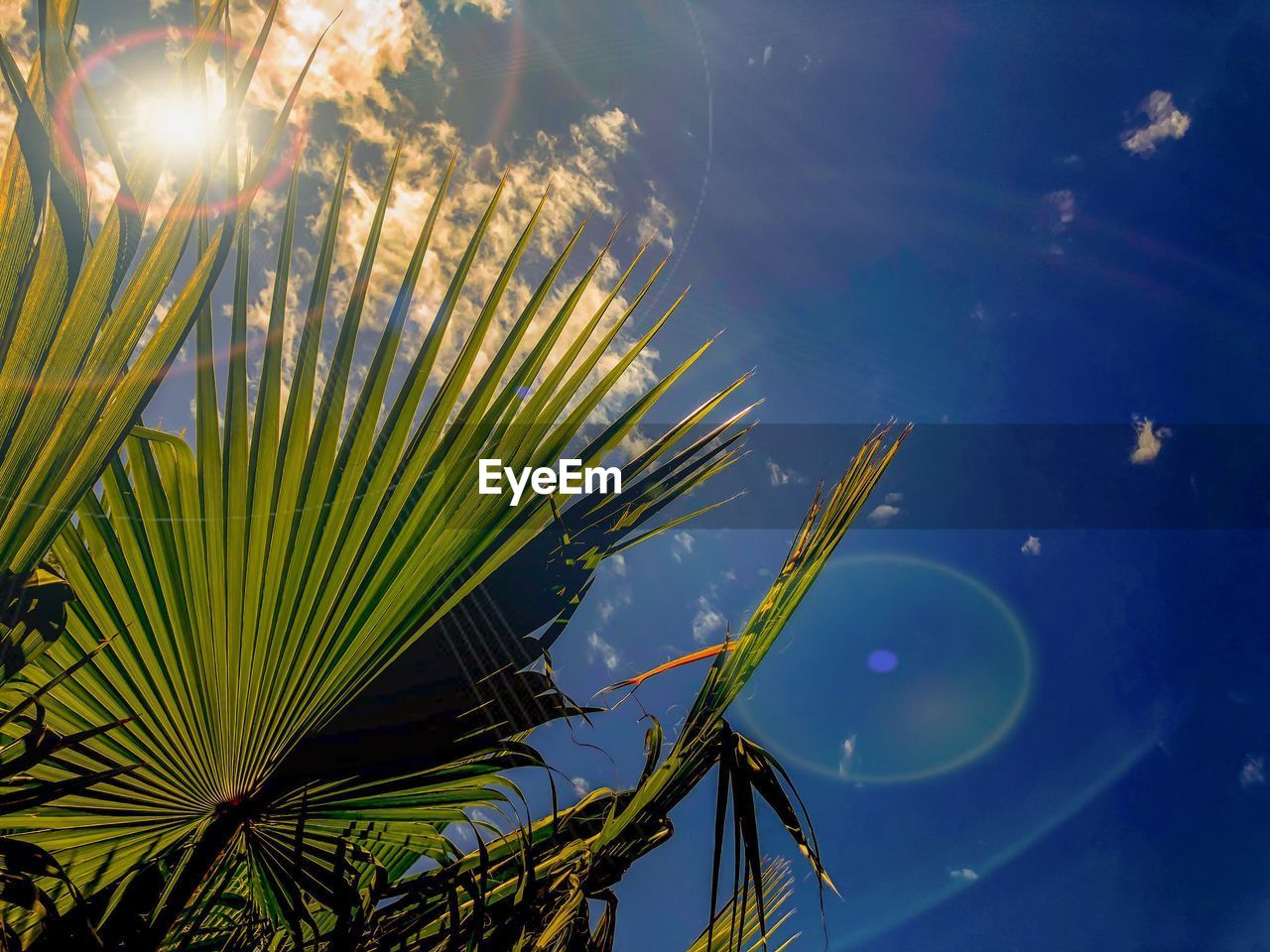 sky, plant, beauty in nature, nature, sunlight, growth, lens flare, no people, low angle view, palm tree, cloud - sky, sunbeam, tree, palm leaf, leaf, day, tropical climate, tranquility, sun, green color, bright
