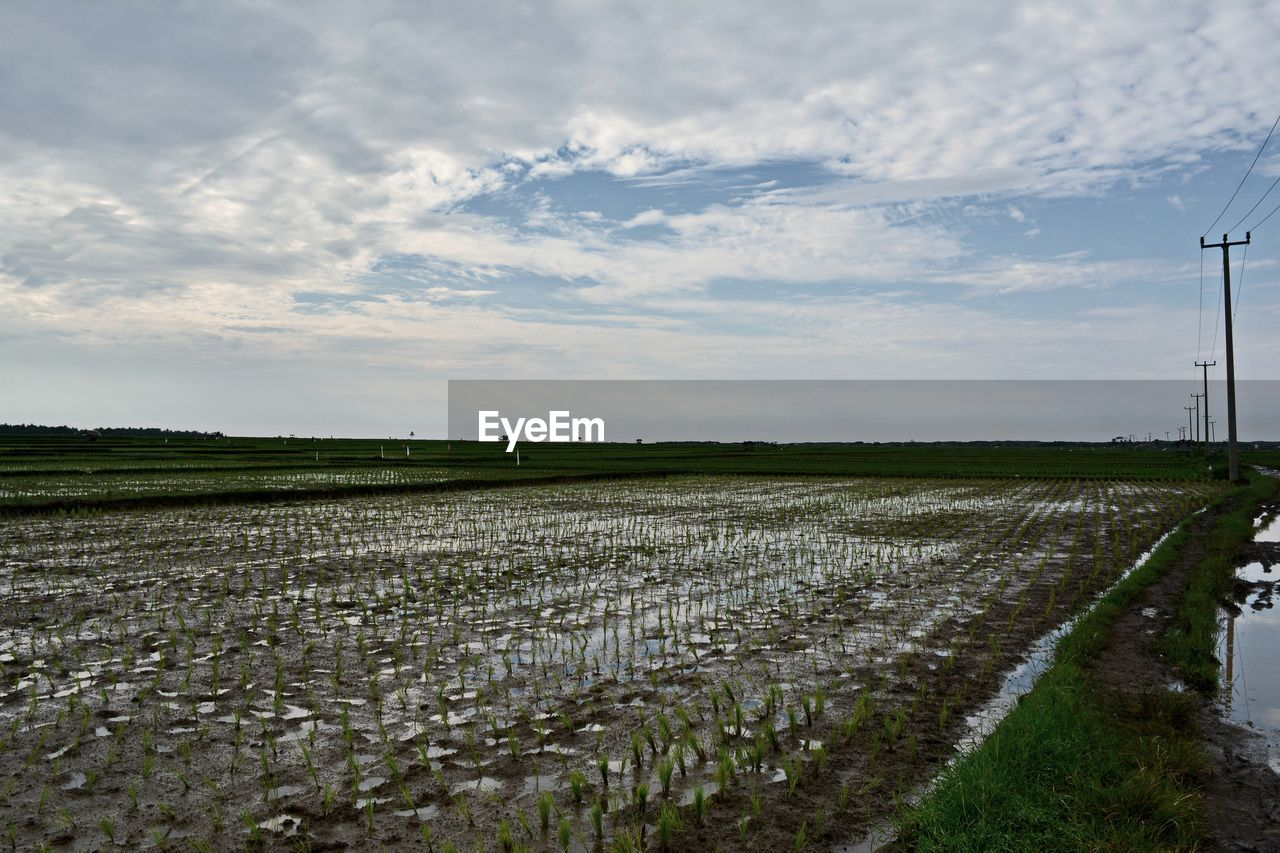 Rice Field Against Cloudy Sky