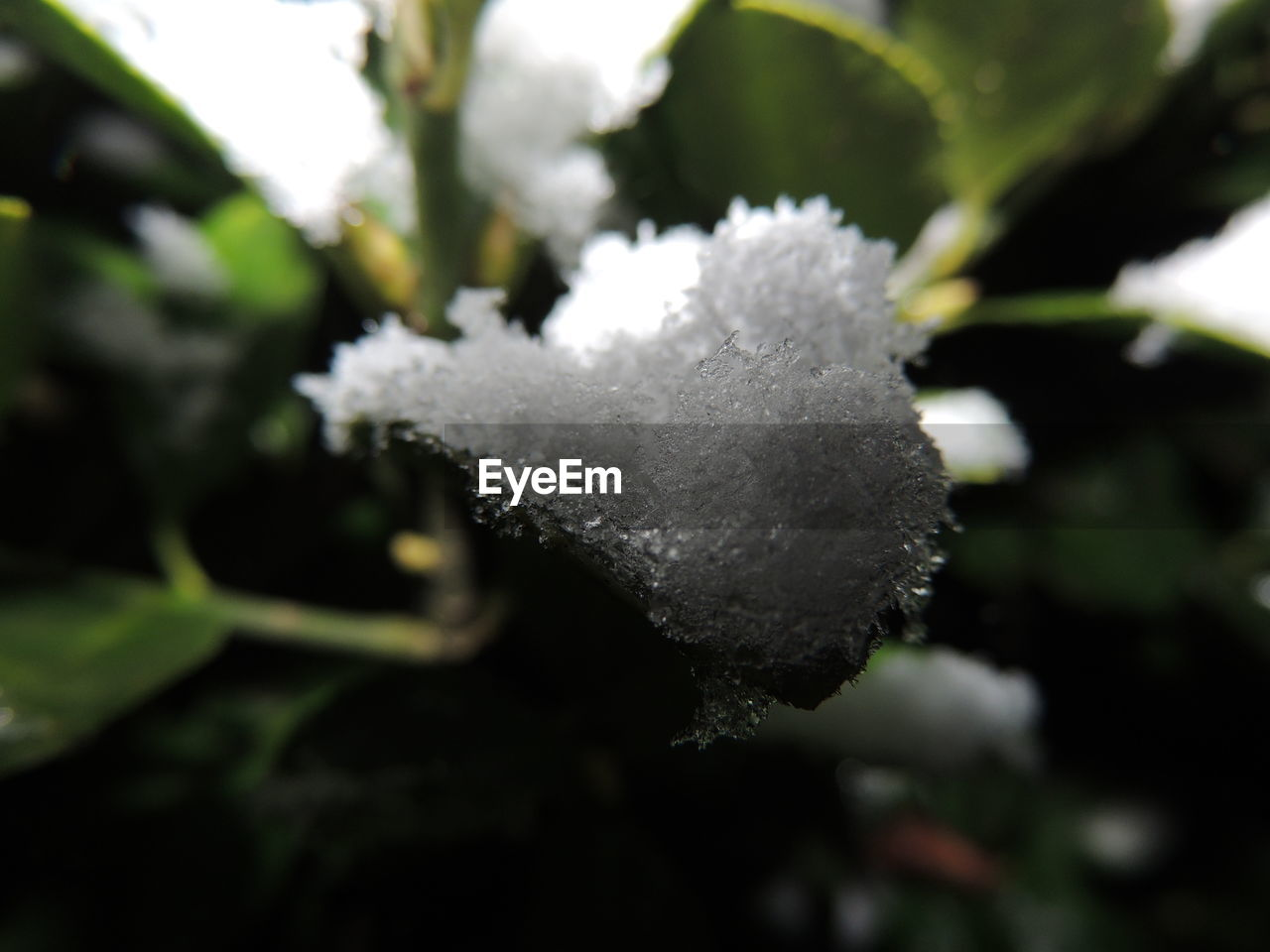 winter, cold temperature, nature, snow, white color, beauty in nature, weather, day, ice, outdoors, close-up, no people, frozen, plant, growth, fragility, freshness, tree