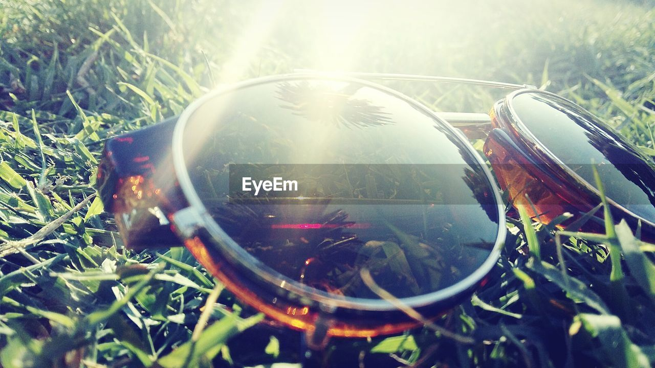 reflection, grass, outdoors, no people, field, close-up, day, nature