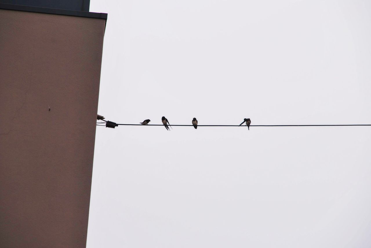sky, bird, perching, animal themes, low angle view, animal, animals in the wild, animal wildlife, vertebrate, clear sky, copy space, connection, group of animals, cable, architecture, nature, electricity, no people, silhouette, power line, outdoors, power supply