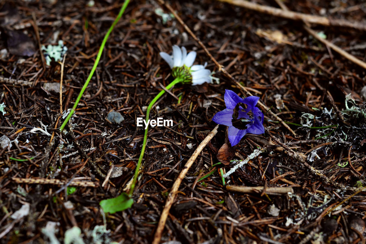 CLOSE-UP OF PURPLE FLOWERS BLOOMING ON FIELD