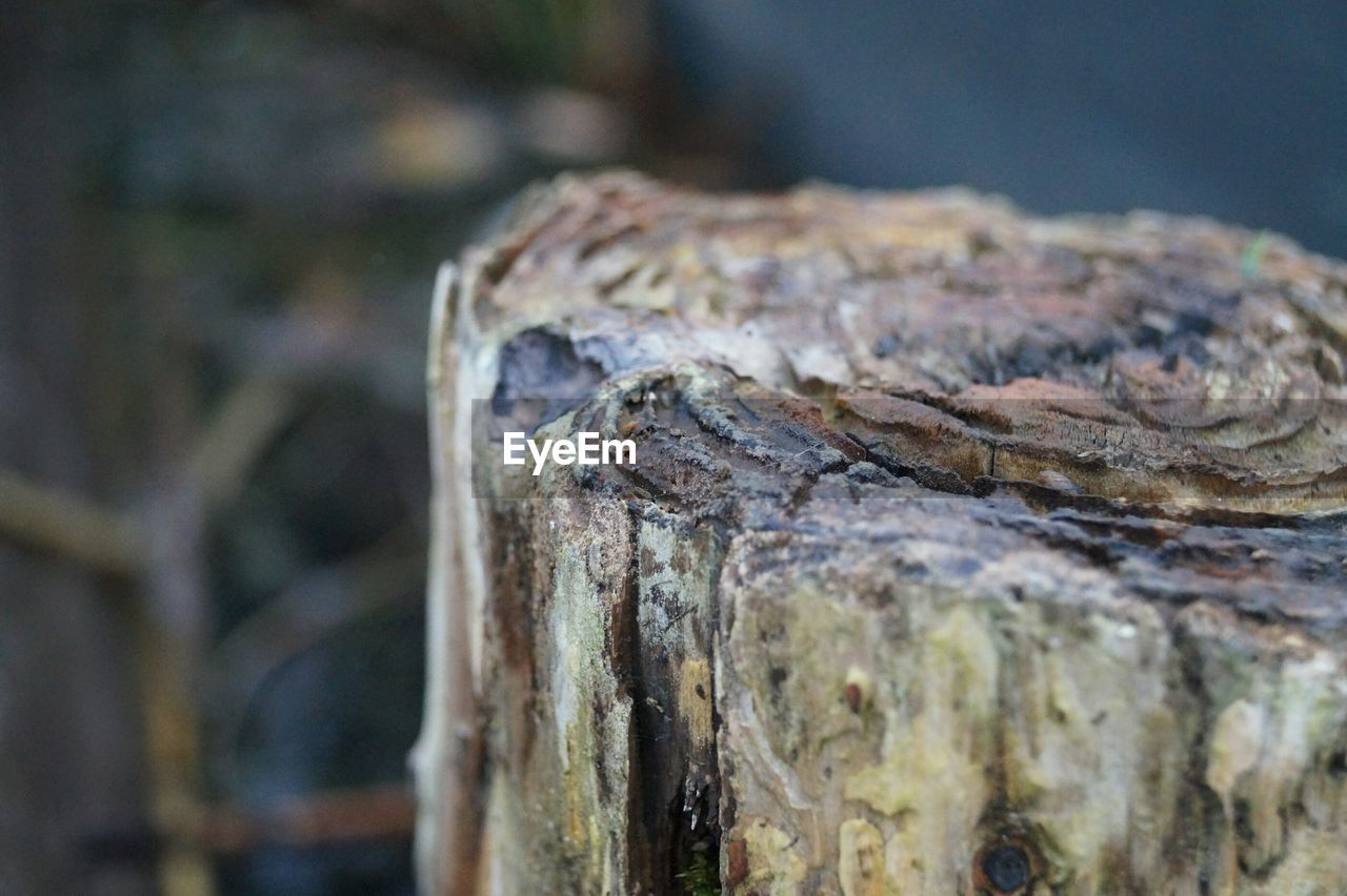 close-up, focus on foreground, wood - material, tree, day, no people, textured, selective focus, wood, rough, nature, outdoors, metal, tree trunk, trunk, pattern, bark, weathered, still life, timber