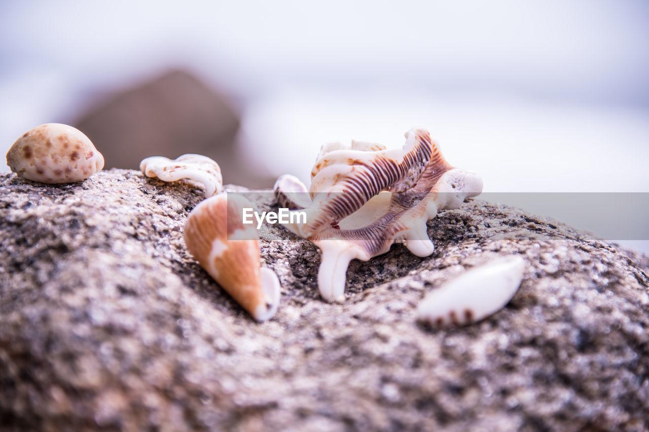 Close-up of seashells on rock