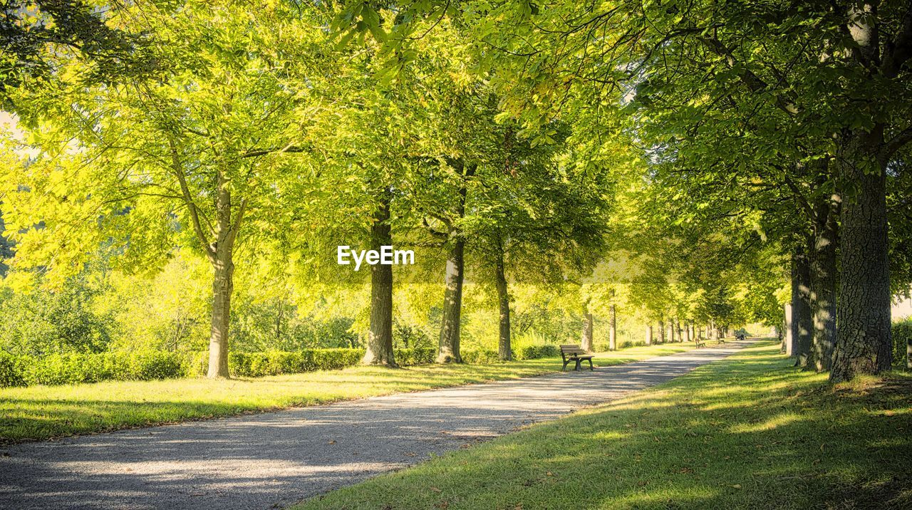 tree, plant, road, nature, green color, transportation, sunlight, shadow, park, city, landscape, grass, treelined, beauty in nature, park - man made space, day, tranquility, outdoors, street, country road, no people