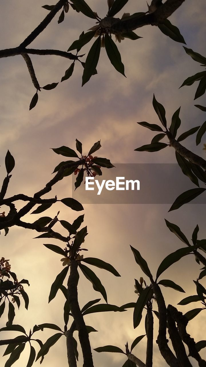 leaf, growth, nature, plant, low angle view, no people, sky, beauty in nature, outdoors, close-up, flower, day, sunset, tree, freshness