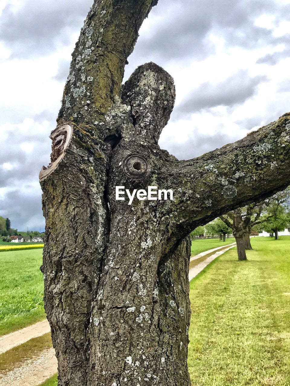 tree, tree trunk, nature, sky, day, field, outdoors, cloud - sky, grass, growth, no people, tranquility, beauty in nature, close-up, branch, dead tree