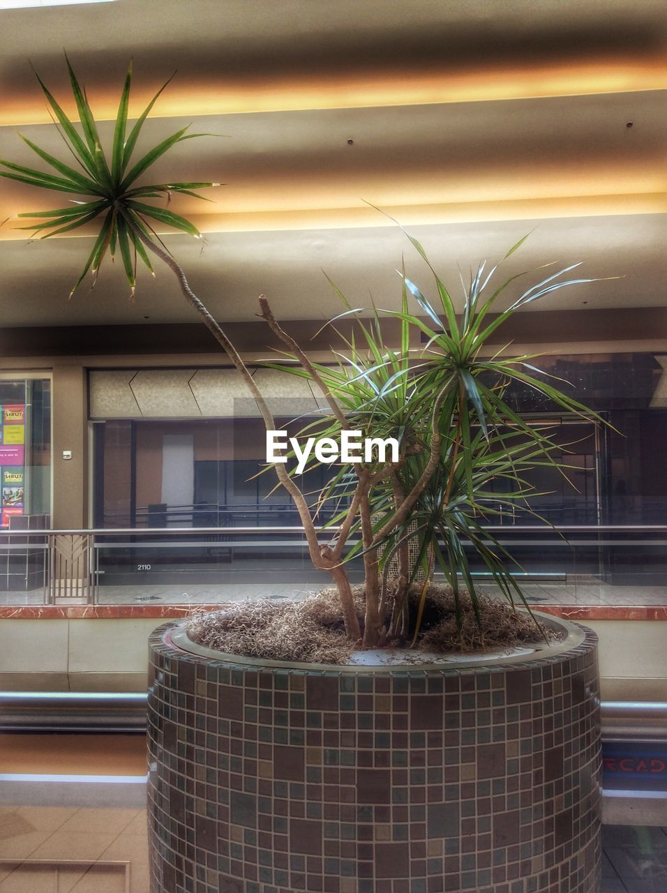 growth, potted plant, built structure, no people, indoors, window, plant, architecture, nature, building exterior, day