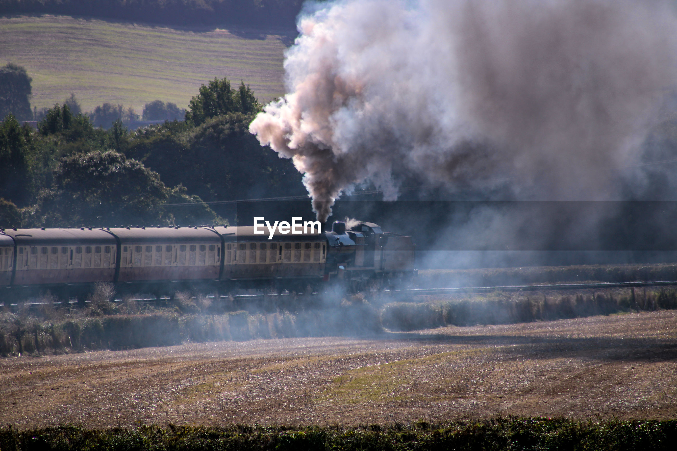 Smoke emitting from steam  train by tree