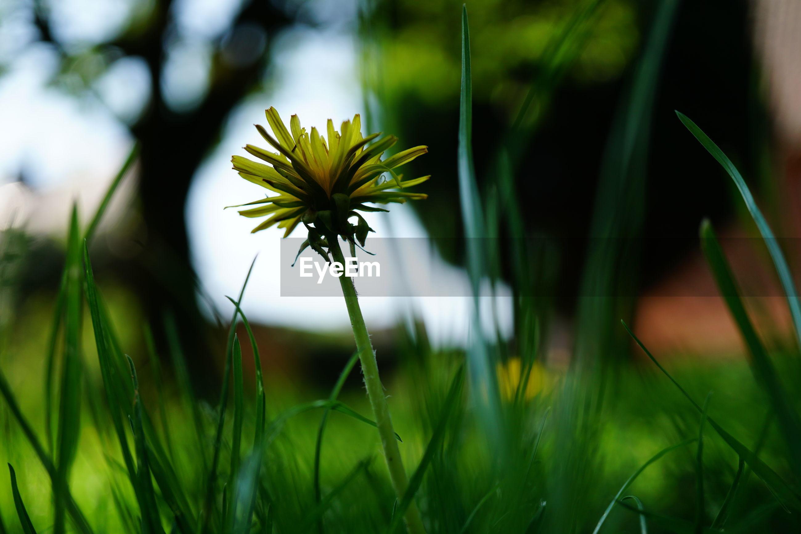 flowering plant on field
