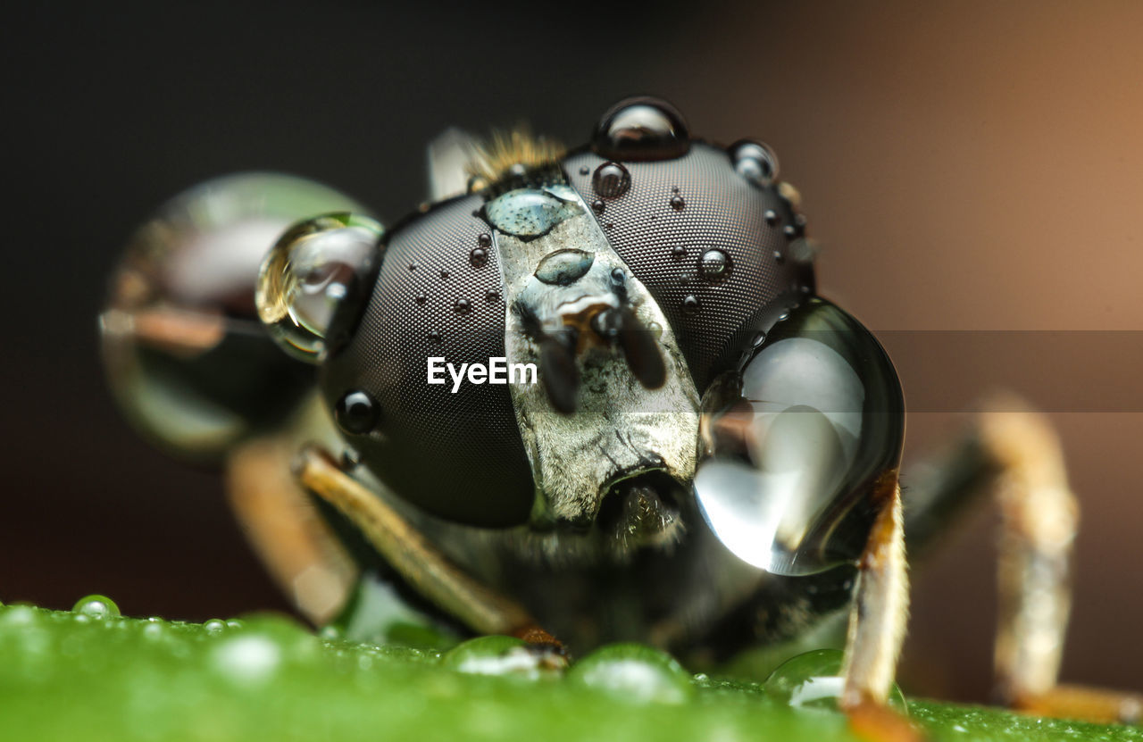 Close-Up Of Fly With Water Droplets