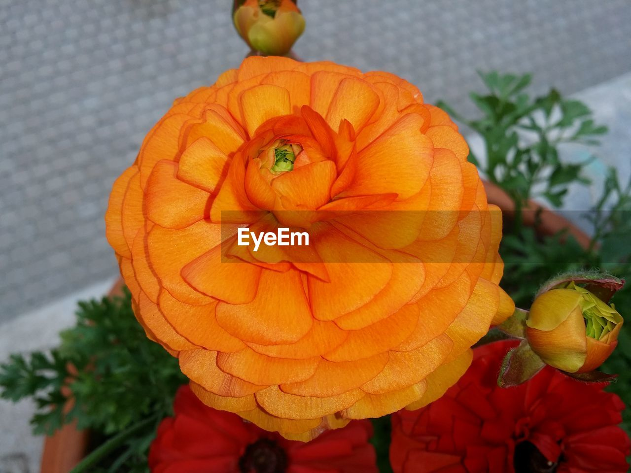 flower, orange color, petal, freshness, flower head, beauty in nature, nature, growth, plant, fragility, day, no people, leaf, blooming, outdoors, close-up, pumpkin