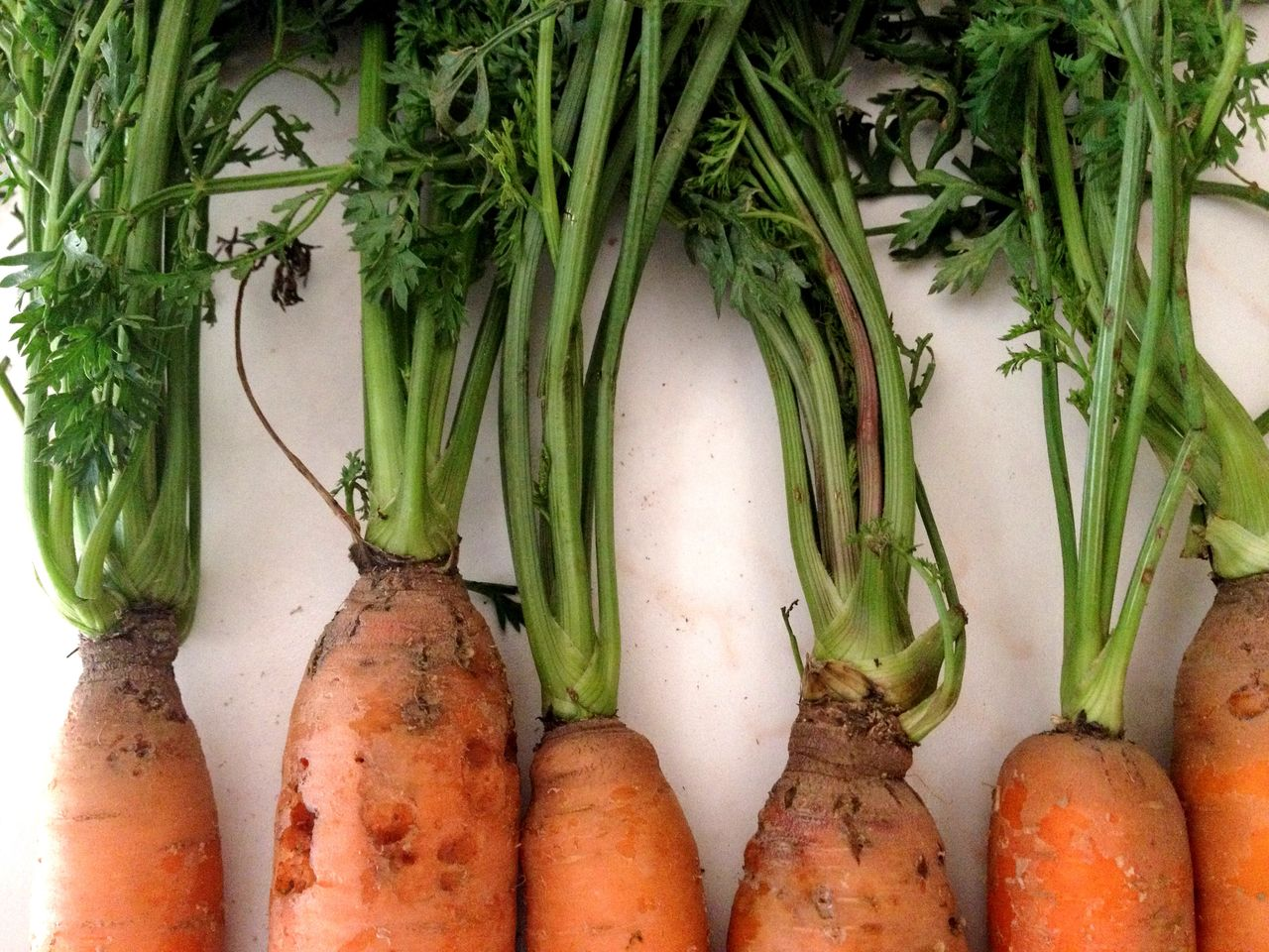 healthy eating, food and drink, wellbeing, food, vegetable, freshness, root vegetable, green color, still life, no people, raw food, carrot, organic, close-up, indoors, large group of objects, for sale, high angle view, market, day, vegetarian food