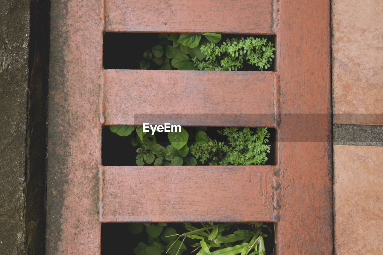Directly above shot of plants growing in sewage