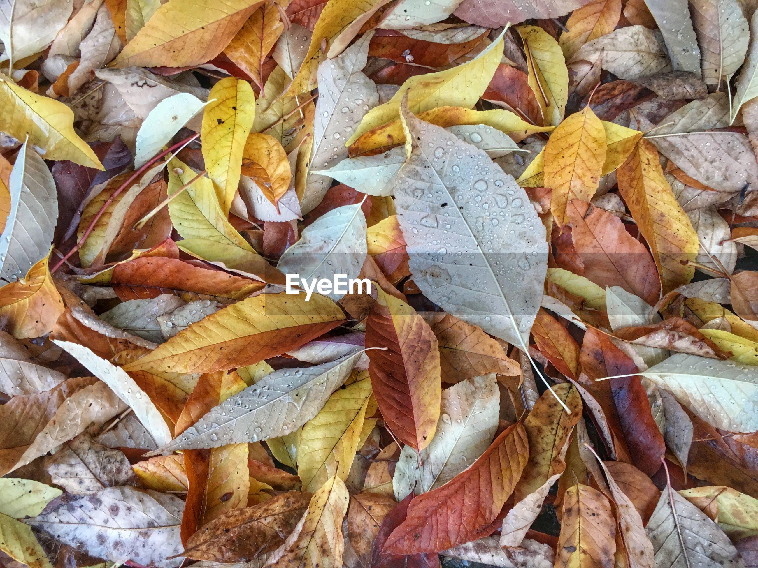 Full frame shot of rotting leaves