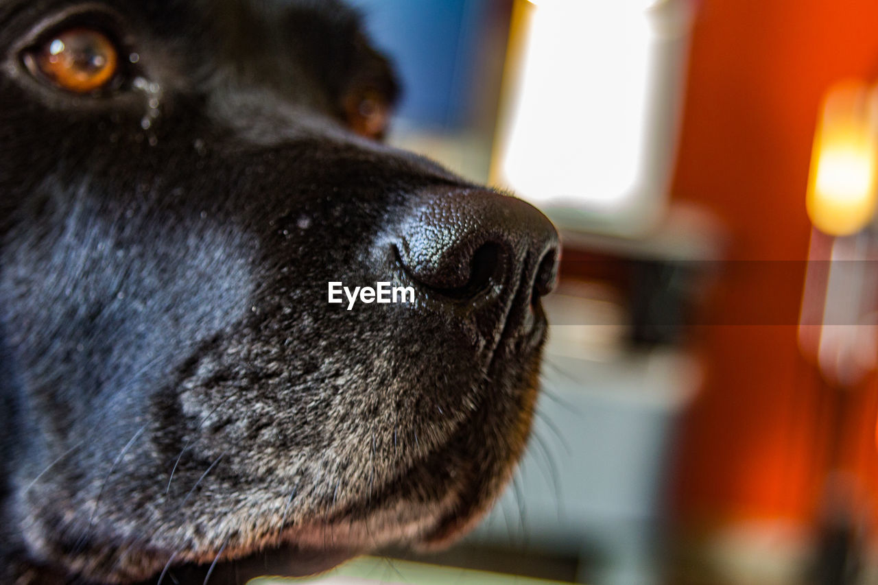 one animal, mammal, domestic, animal themes, pets, domestic animals, canine, animal, dog, animal body part, close-up, focus on foreground, animal head, vertebrate, looking, looking away, no people, animal nose, day, eye, animal eye, snout, animal mouth, whisker