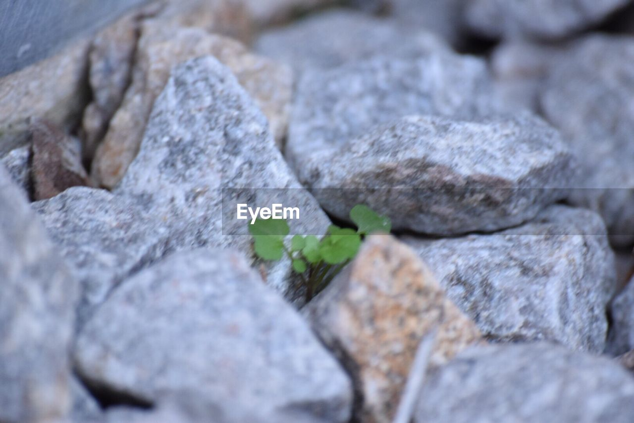 rock - object, no people, close-up, textured, selective focus, full frame, day, nature, outdoors, freshness
