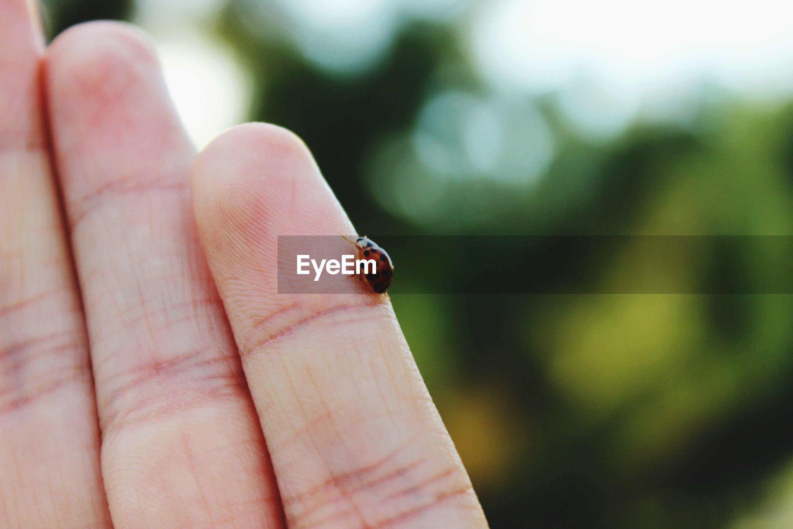 Close-up of ladybug on cropped finger