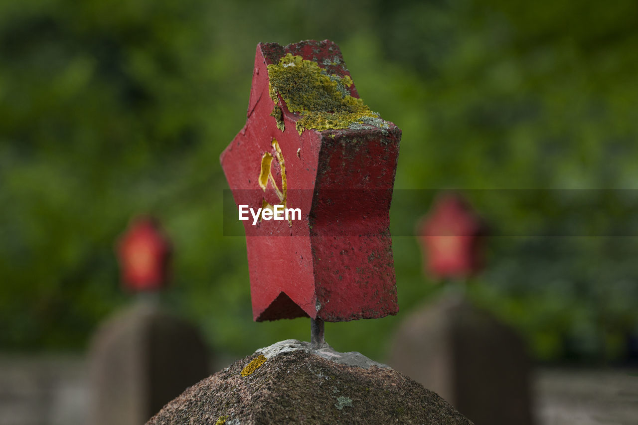 focus on foreground, no people, close-up, nature, solid, day, grave, red, cemetery, outdoors, plant, stone material, stone, religion, tombstone, selective focus, spirituality, belief, stone - object, growth