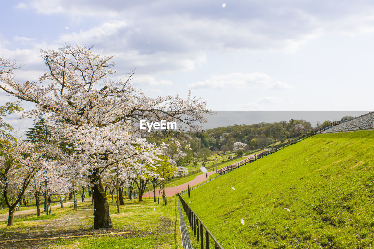plant, tree, beauty in nature, sky, growth, flower, landscape, nature, springtime, grass, blossom, field, tranquil scene, flowering plant, green color, tranquility, land, freshness, cloud - sky, day, no people, cherry blossom, outdoors, cherry tree