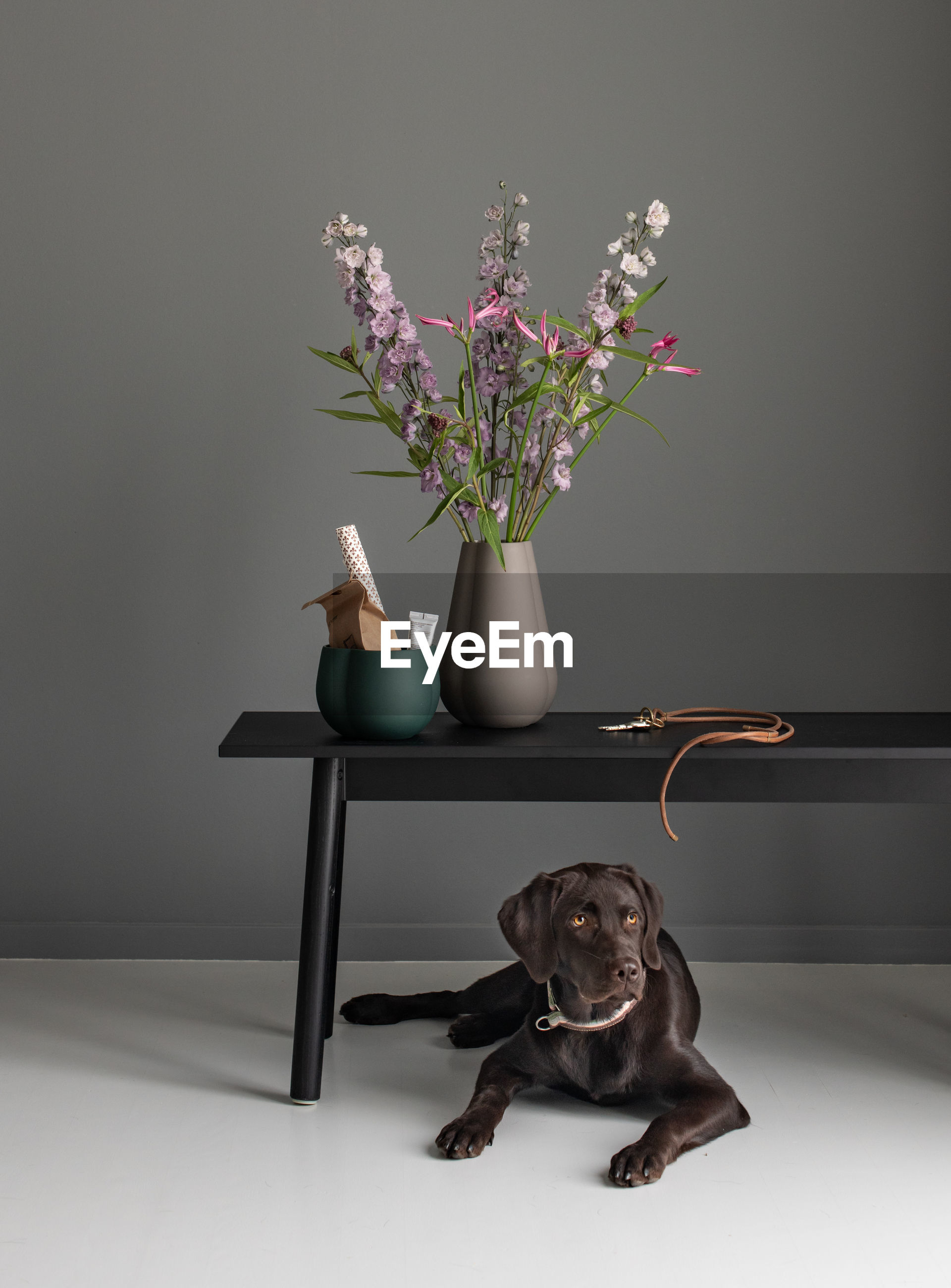 VIEW OF DOG SITTING ON TABLE