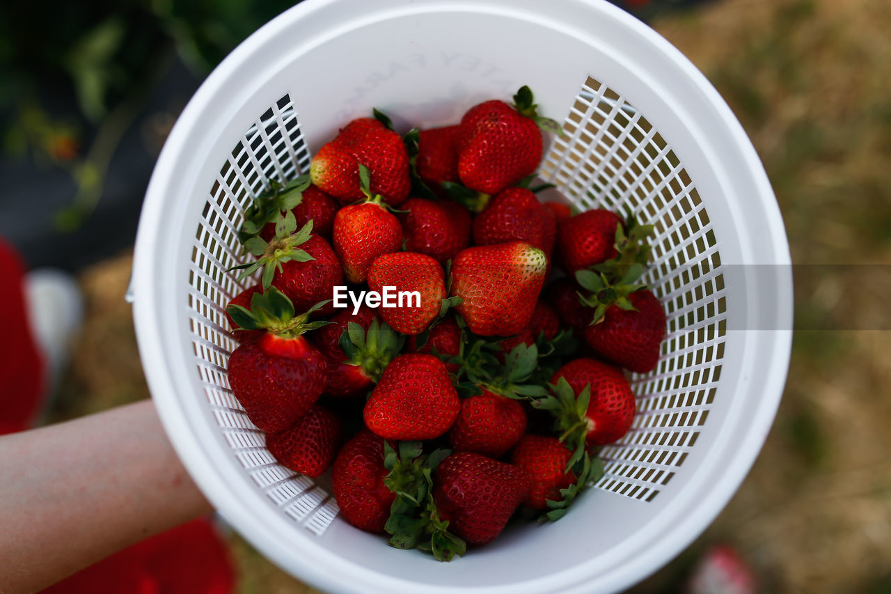 healthy eating, berry fruit, fruit, wellbeing, strawberry, red, food, food and drink, bowl, freshness, human hand, focus on foreground, hand, close-up, holding, real people, one person, high angle view, human body part, finger