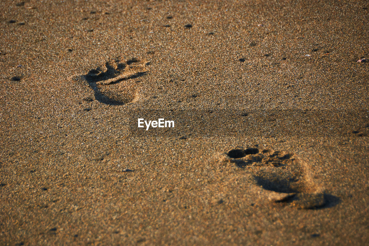 sand, land, beach, no people, footprint, nature, animal, animal themes, day, high angle view, brown, print, one animal, animal track, full frame, close-up, pattern, sunlight, selective focus, animal wildlife, surface level