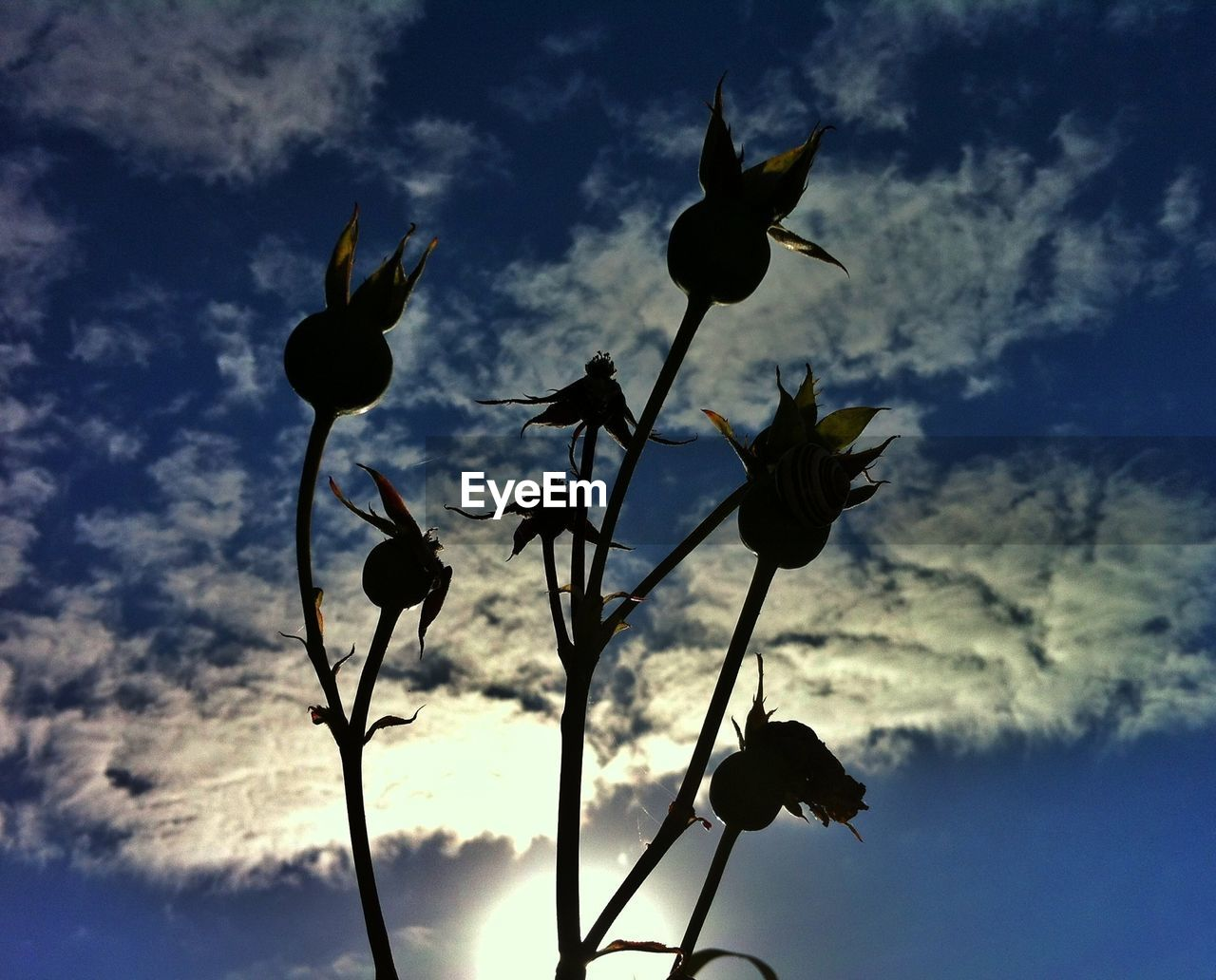 Close-up of silhouette plants against the sky