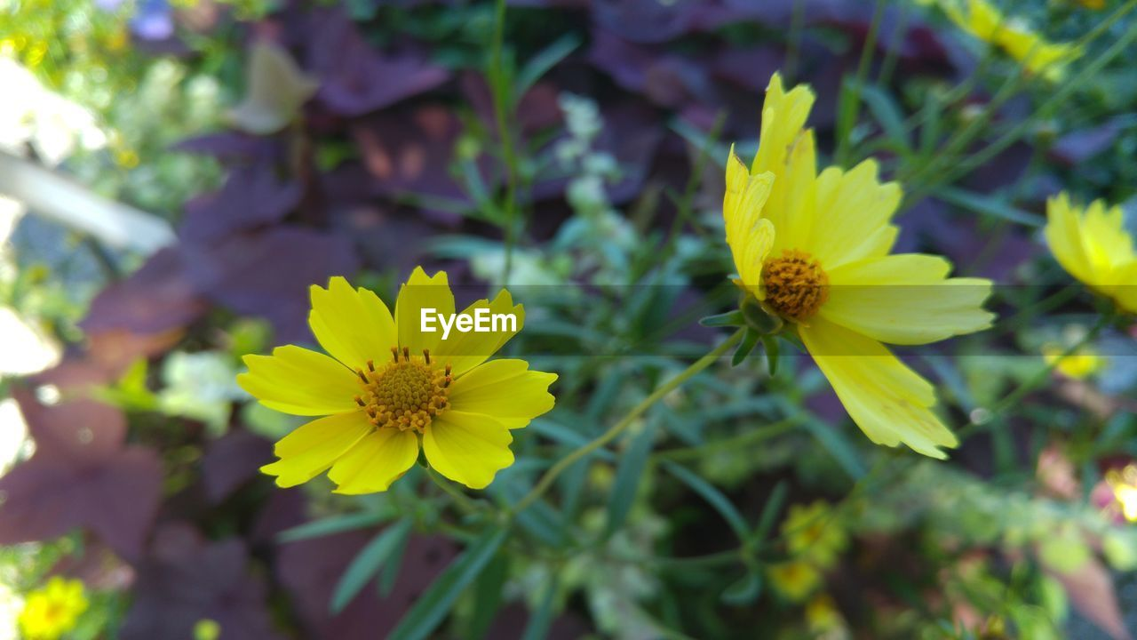 flower, yellow, petal, growth, fragility, flower head, nature, plant, freshness, beauty in nature, outdoors, blooming, day, close-up, no people