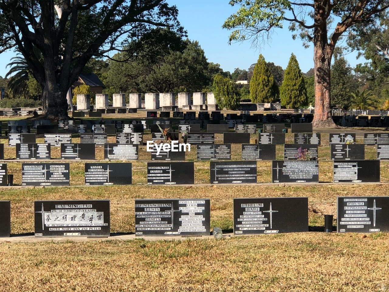 tree, plant, nature, day, grave, no people, cemetery, tombstone, stone, architecture, sky, in a row, built structure, outdoors, history, side by side, the past, building exterior