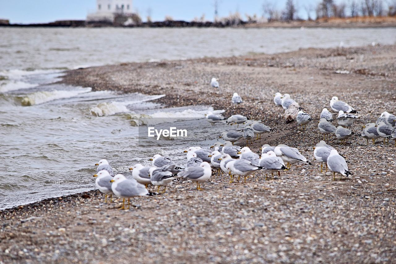 bird, animals in the wild, beach, animal wildlife, nature, large group of animals, animal themes, no people, outdoors, sand, seagull, day, close-up