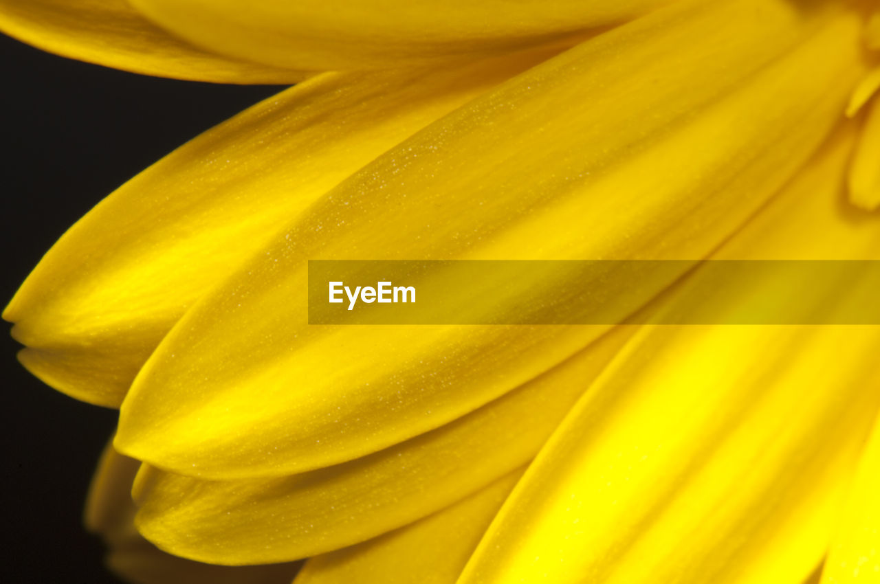 EXTREME CLOSE-UP OF YELLOW FLOWER