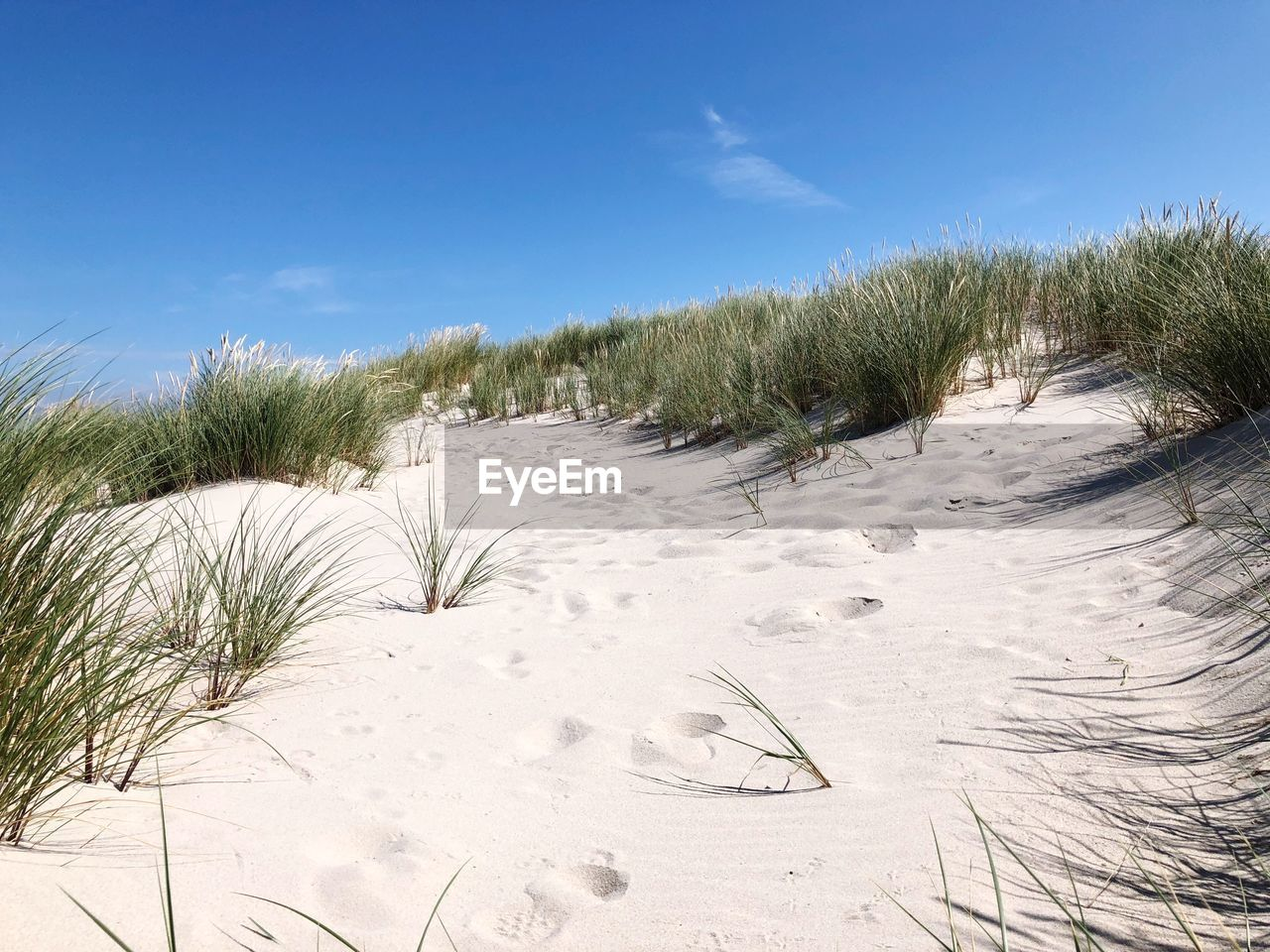 sky, sand, plant, land, beauty in nature, tranquility, nature, grass, growth, beach, tranquil scene, no people, winter, scenics - nature, snow, day, cold temperature, non-urban scene, landscape, cloud - sky, marram grass, outdoors